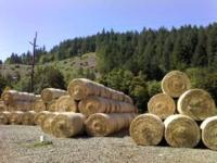 Round Grass hay bales, hay is chopped and rolled into