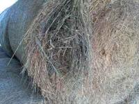 Alfalfa an orchard round bales . 32 bales stored in