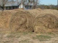 Bermuda mix grass round bales 4 X 5, approximately