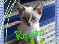 Rowen's story If you are interested in adopting on of