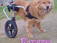 Roxanne's story Roxanne is a 5 year old, female,