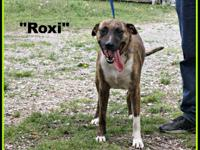 1803065 - Roxi - approx 4 yrs, spayed mixed breed