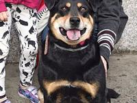 Roxie **FOSTER NEEDED**'s story Roxie is a 5 year old,