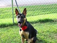 Roxie's story Roxie is 9 months old, spayed,