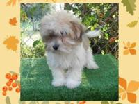 Allure House Havanese is thrilled to be blessed with