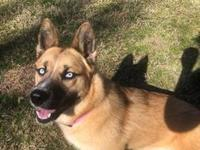 Roxie's story Meet Roxie! She is house trained and