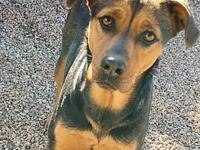 My story Meet Roxy 2 JuMThey labeled me a Coonhound mix
