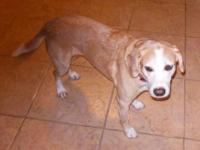 Greetings, My name is Roxy! I am an older female Beagle