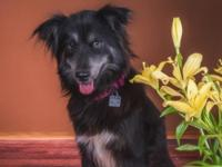 Roxy is a sweet, loving, gentle, easy to add to your