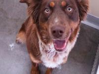 Roxy is a very sweet Border collie mix about a year