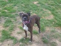 Roxy's story Roxy is a very sweet girl she will be 6 in