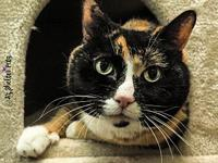 Roxy's story Introducing... a crazy calico cat in a