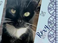 My story Roxy is a sweet and adorable Tuxedo young cat.