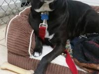 Roxy is a 7 year old sweetheart who is looking for a