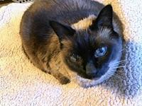 ROXY - Offered by Owner Senior Siamese's story