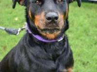 Roxy's story Hi. My name is Roxy and I am a 4 and half,