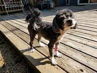 Roxy's story I was dumped at the shelter by my owner,