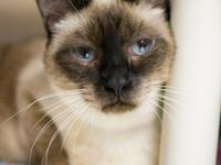 This gentle feline is looking for a home she can
