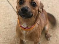 "roxy's story Roxy ""I am a delightful puppy with a"