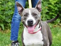 My story Hi I'm Roxy! I'm a sweet happy go lucky girl
