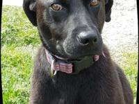 Roy is  a fun loving, active 1 yr. lab mix:)  He will