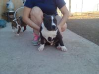 Have1 male 1200dlls 2 females a black 800dlls n