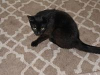 My story Roz is a sweet little cat that was discarded,