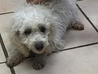 Rozi's story Rozi is a sweet 5 month old poodle ready
