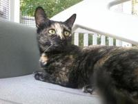 Rozie's story This very sweet and cute kitty is a new