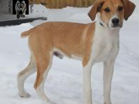 Rozier is a hound mix that was born around August 10,