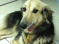 Ruana's story Ruana lived in foster for two months in