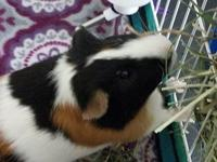 Rubble, a distinguished gentlepig, is cool as a