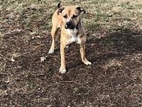 My story Ruben is a 2 year old male Mixed Breed Dog. He