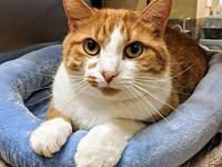Rubix's story Rubix is a handsome orange and white