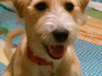 HI! THIS BEAUTIFUL PUPPY IS RUBY! SHE IS A TERRIER