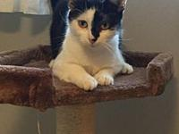 Ruby (adult female)'s story Ruby is a black and white