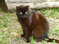 Ruby's story Ruby is a sweet, gentle and humble female