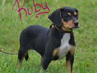 Ruby's story Ruby is a sweet loving puppy in search of