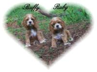 """Ruby & & Buffy"" are playful and really pleasant"