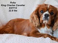 Ruby's story Please contact Constance