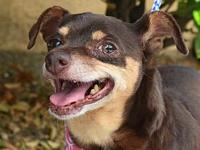 RUBY's story Ruby is a loving senior little gal who's