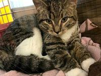 Ruby's story Ruby is a petite Tabby and white female