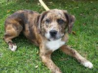4 month old hound mix pup available for adoption. Such