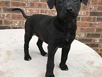 Ruby Tuesday's story Ruby Tuesday 7 weeks old (2/12),