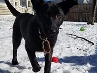 My story Ruby is a 5 month old Shepard mix female pup.