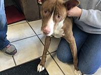 Ruby's story To meet this dog in person please stop by