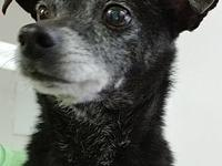 RUDEE's story Rudee is a senior chihuahua mix who is