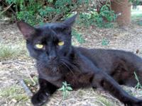 Rudy is a wonderful, beautiful exotic looking cat! Rudy