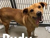Rudy 11904's story Rudy is a 3-5 yr old Shepherd mix.