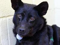 My story Hi there! My name is Ruffles. I'm a sweet girl